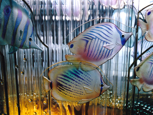 熱帯魚が泳いでます。