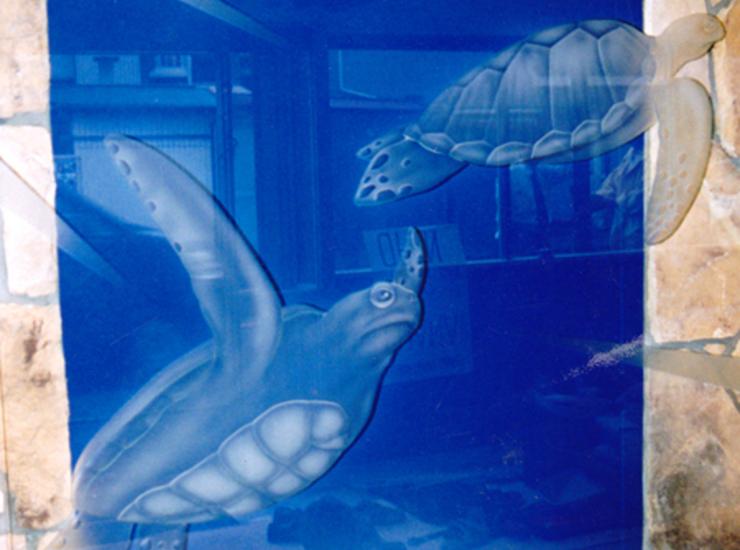 ホヌ(カメ)のサムネイル