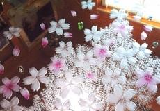 桜の彩色ミラー